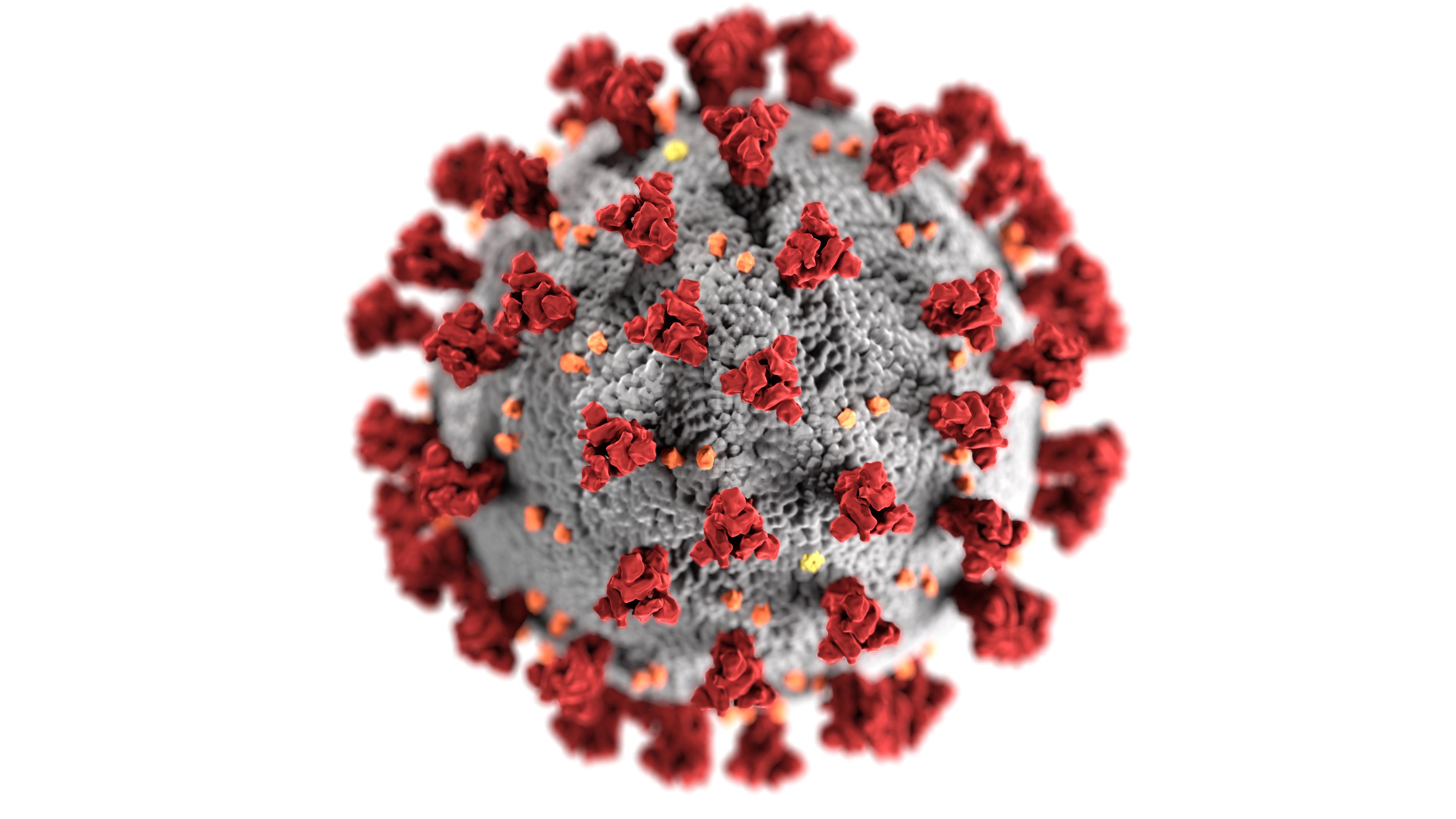 Coronavirus COVID-19
